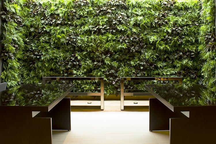 Saiba o que é um jardim vertical